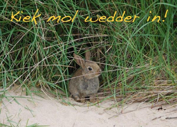 Foto-Postkarte A6 Hase