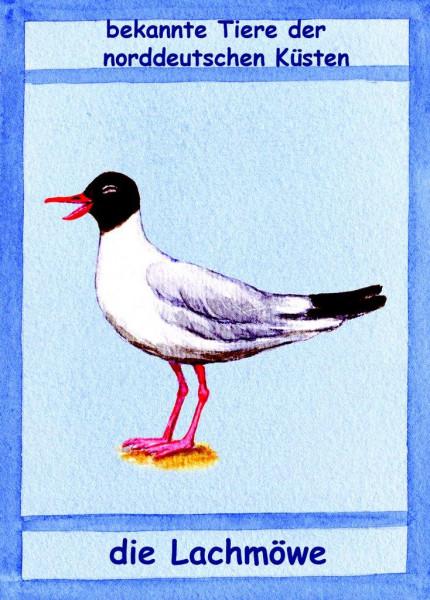Postkarte Küstentiere, Lachmöwe