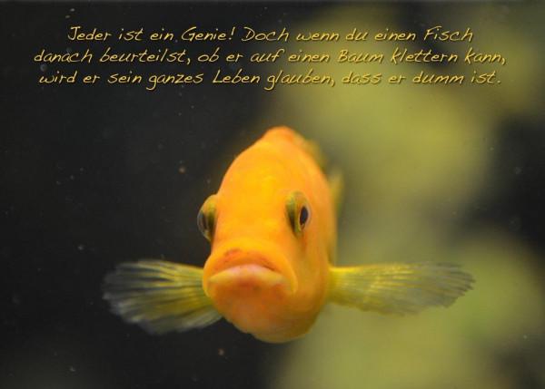 Foto-Postkarte A6 Fisch