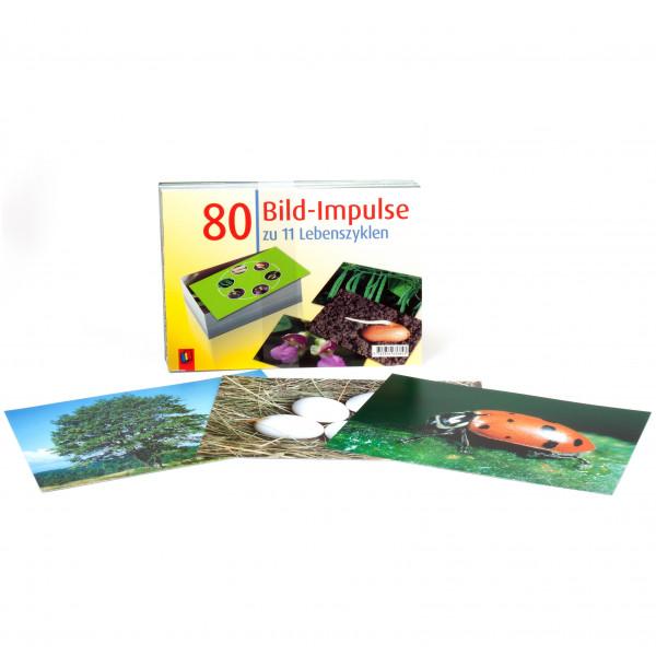 80 Bild-Impulse Lebenszyklen