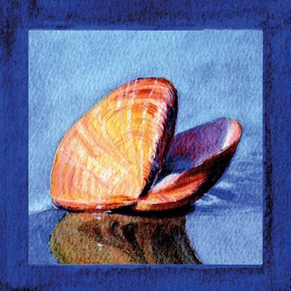 Magnetschild Muschel