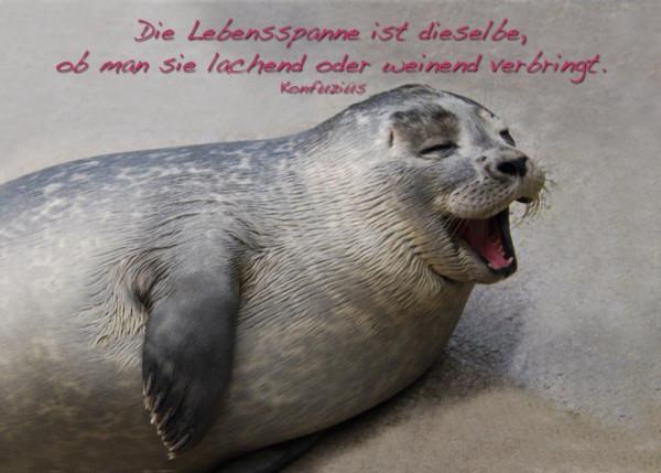 Foto-Postkarte A6 Robbe