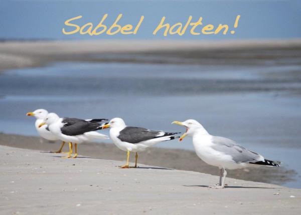 Foto-Postkarte A6 Möwen